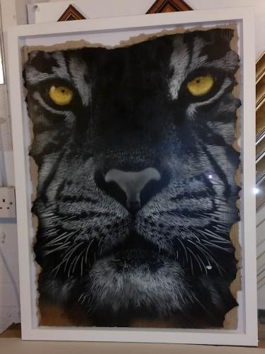 Tiger in white frame