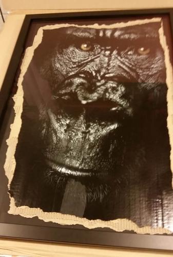 gorilla on card Snik