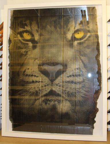 snik gold tiger